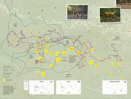 secret map these amazing maps secret of animals tracked with