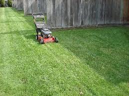 Ticks In Backyard Can Applying Sulfur To Your Yard Get Rid Of Ticks U0026 Fleas Hunker