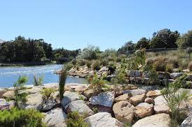 australian native water plants powells creek sydney water talk