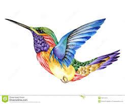 watercolor colibri bird stock vector image 52994859