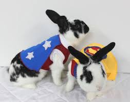 Halloween Costumes Bunny Rabbits 44 Costumes Bunny Images Animals Animal