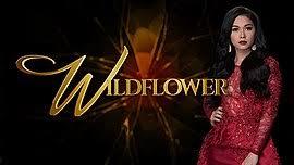 Seeking Episodes List List Of Wildflower Episodes