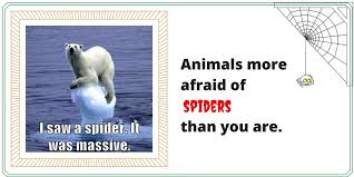 Afraid Of Spiders Meme - funny animals more afraid of spiders than you are fridayfrivolity