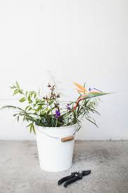 easy to care for indoor plants