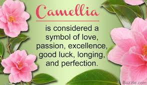 what do camellia flowers symbolize we bet you didn t this