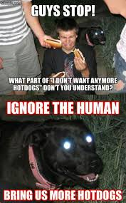 Hot Dog Meme - ignore the human bring more hot dogs soepic
