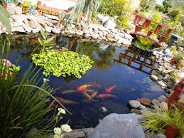 backyard pond fish backyard ponds ideas walsall home and