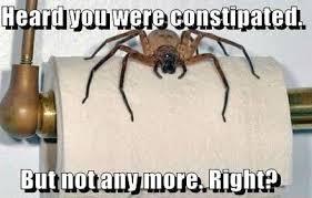 Funny Spider Meme - 23 funny spider memes weneedfun
