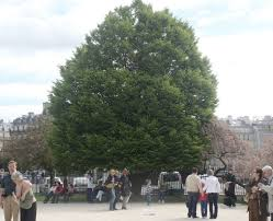 cool trees shade trees cool summer biotope city