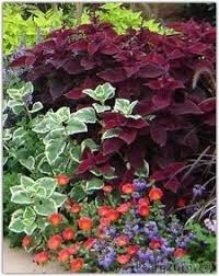 heat loving plants some native texas plants heat and drought tolerant which means low