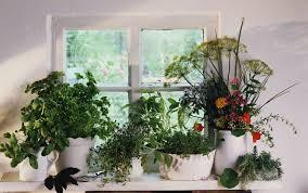 herb pots for windowsill how to grow herbs indoors on a sunny windowsill