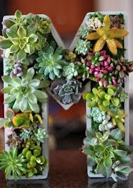 best 25 hanging succulents ideas on pinterest succulent wall
