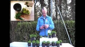 irish native plants shamrock plants from ireland youtube