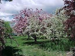 Washington State Botanical Gardens Yakima Area Arboretum Yakima Washington Tourist Information