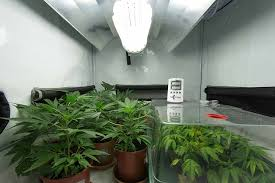 cfl lights for growing weed best cfl grow lights 2018 grow guide reviews green and vibrant