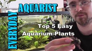 5 easy to grow aquarium plants youtube