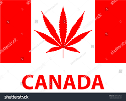Candaian Flag Drawn Weed Canada Flag Pencil And In Color Drawn Weed Canada Flag
