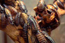 cockroaches in ri pest prevention tips pinterest