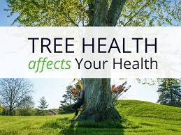 why tree healthcare is important anglin brothers tree care new