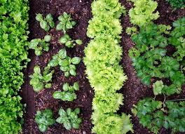 What Type Of Soil For Vegetable Garden - types of soil all you need to know bob vila