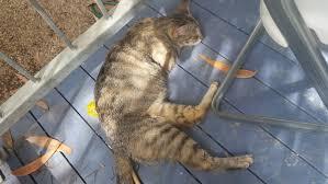 stray cat and kittens brisbane