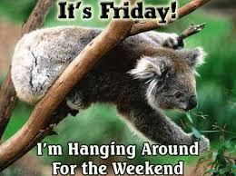 Koala Bear Meme - it s friday i m hanging around for the weekend koala bear meme
