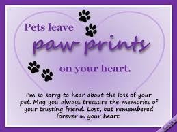 loss of pet sympathy ecards for loss of pet 516 best rainbow bridge for