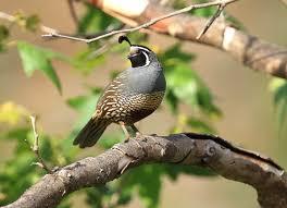 member photo gallery u2013 san fernando valley audubon society