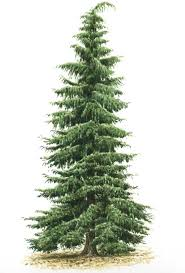 48 best tree shoot inspiration board images on pinterest