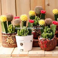 ornamental cactus ornamental cactus suppliers and manufacturers