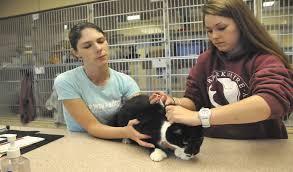 berkshire humane society u0027bursting at seams u0027 with pets the