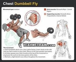 Incline Bench Muscle Group What Exercises Do I Need To Do To Shape My Chest And Area