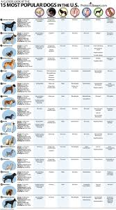 Anatomy Directional Terms Worksheet 123 Best Vet Tech Images On Pinterest Veterinary Medicine