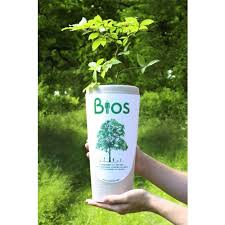 cremation tree bios tree urn bios tree urn cremation ashes