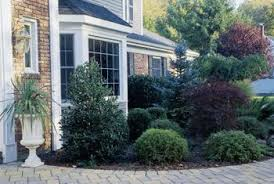 ornamental trees for planting to houses home guides