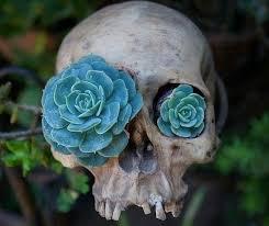 Backyard Skulls Succulents In Skull Succulents Pinterest Gardens Plants And