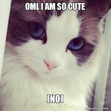 Cute No Meme - oml i am so cute no ridiculously photogenic cat make a meme
