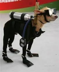 Lab Halloween Costume Ideas 27 Reasons Labradors Are The Best Creatures In The Galaxy