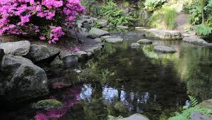 this japanese style landscaped garden is in brisbane botanic