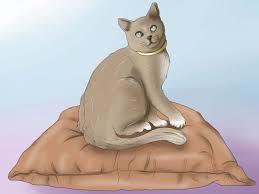 Katze Schlafzimmer Ja Bett Nein Deine Katze Dazu Bringen Bei Dir Zu Schlafen U2013 Wikihow