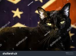 Black Confederate Flag Large Black Cat Front Confederate Flag Stock Photo 474870694