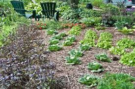 shawna coronado u0027s front yard vegetable garden growing a greener