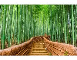 Forest Mural by Bamboo Forest Wall Mural 6043