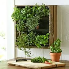 wall garden indoor windowsill garden indoor wall herb garden ideas