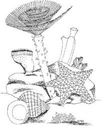 sea plants coloring pages sea turtles coloring pages printable coloring pages pinterest