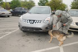 nissan rogue for dogs 2011 year in review u003e goodfellow air force base u003e article display