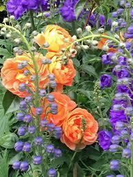 Classic Cottage Classic Cottage Garden Flowers U2013 Susan Rushton