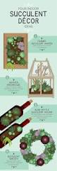 best 25 indoor succulent planter ideas on pinterest indoor
