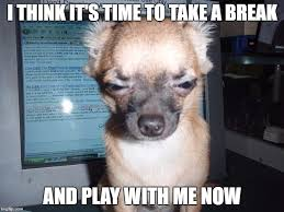 Pay Attention To Me Meme - funny chihuahua meme pay attention to me funny pups pinterest