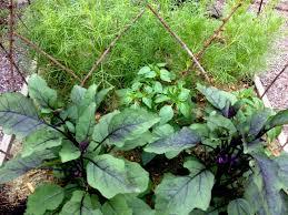 straw mulch for vegetable garden ideas choosing mulch for